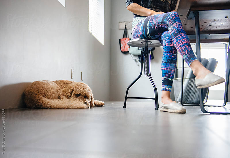 Goldendoodle sits with his owner at work by Cara Dolan for Stocksy United