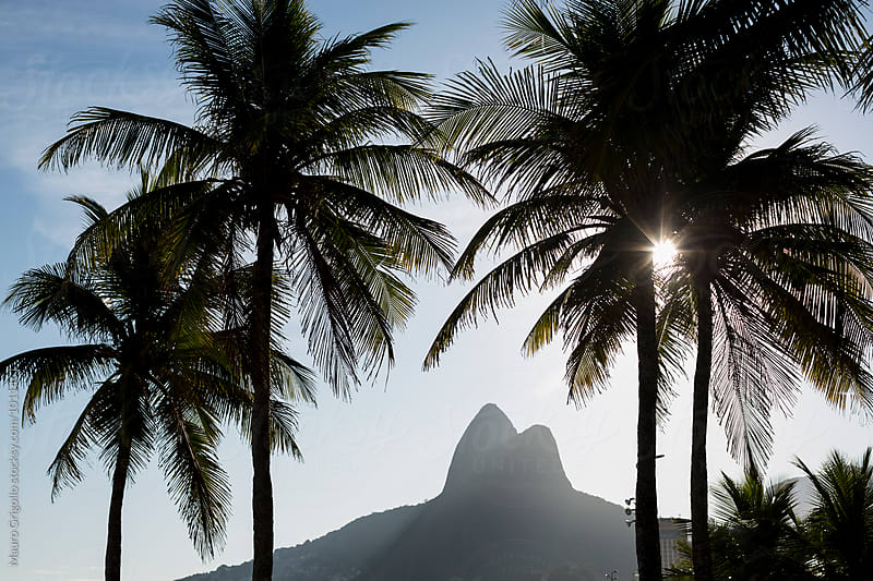 Palm trees on Ipanema beach, Rio de Janeiro, Brazil. by Mauro Grigollo for Stocksy United