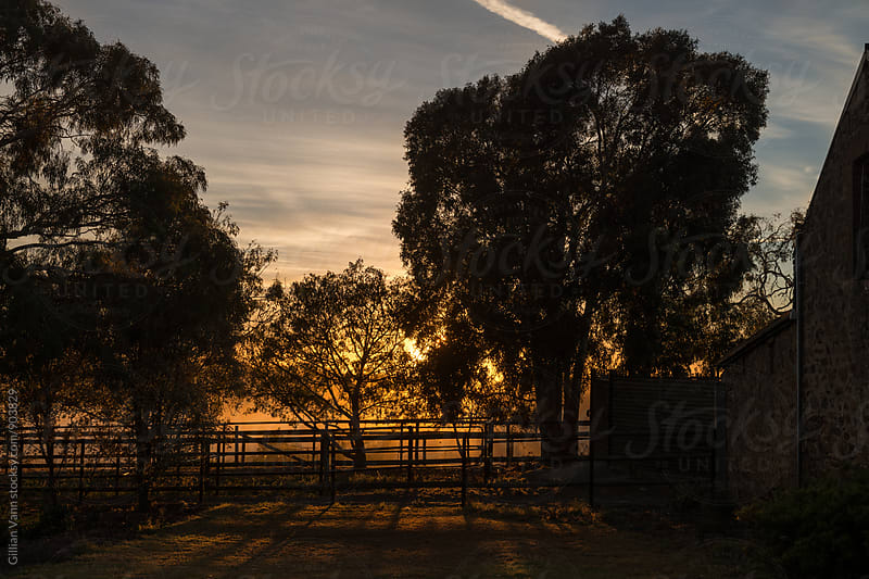 sunrise shining through the trees on a farm by Gillian Vann for Stocksy United