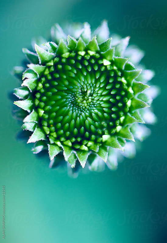green blossom from above by alan shapiro for Stocksy United