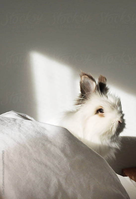 White Rabbit by Sadie Culberson for Stocksy United