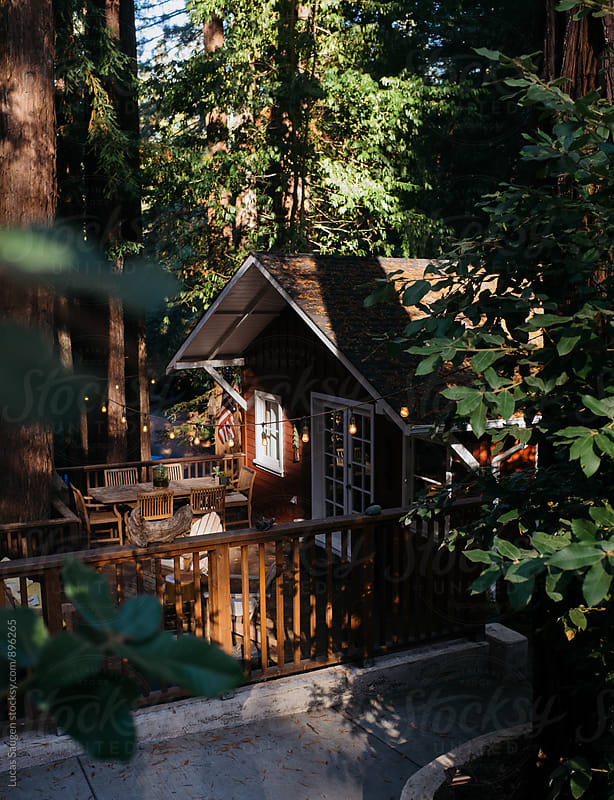 Looking at a little cottage in the redwoods. by Lucas Saugen for Stocksy United