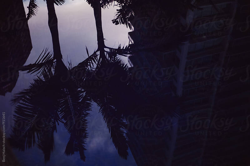Blue nights and palm trees by Benj Haisch for Stocksy United