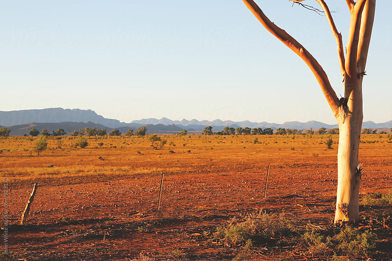 Flinders Ranges. South Australia. by John White for Stocksy United