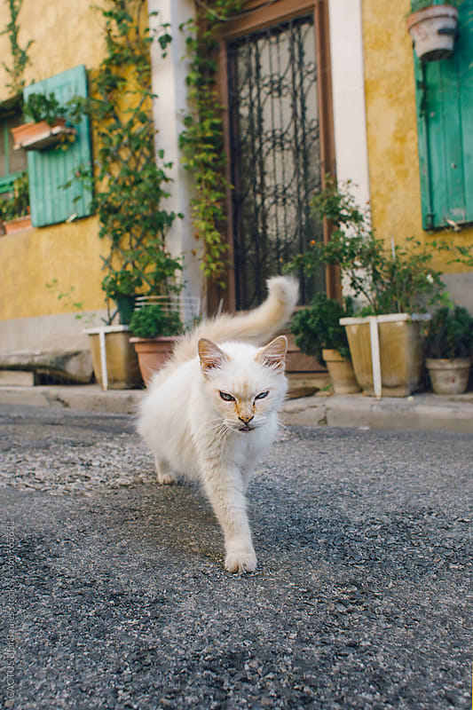 Street cat by CACTUS Blai Baules for Stocksy United