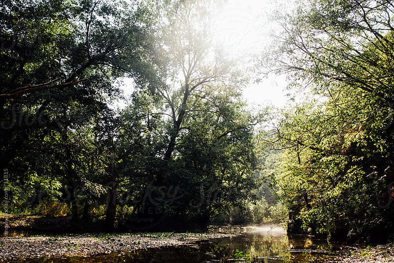 Beautiful forest river  by Boris Jovanovic for Stocksy United