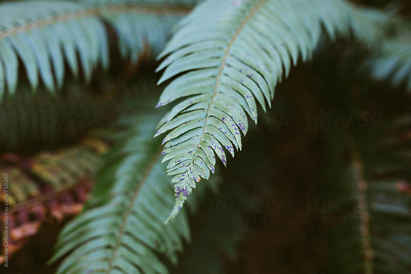 Fern Leaf by Andrew Cebulka for Stocksy United