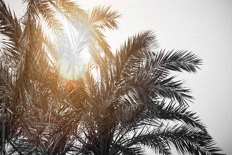 details of palm with sunshine  by Javier Pardina for Stocksy United