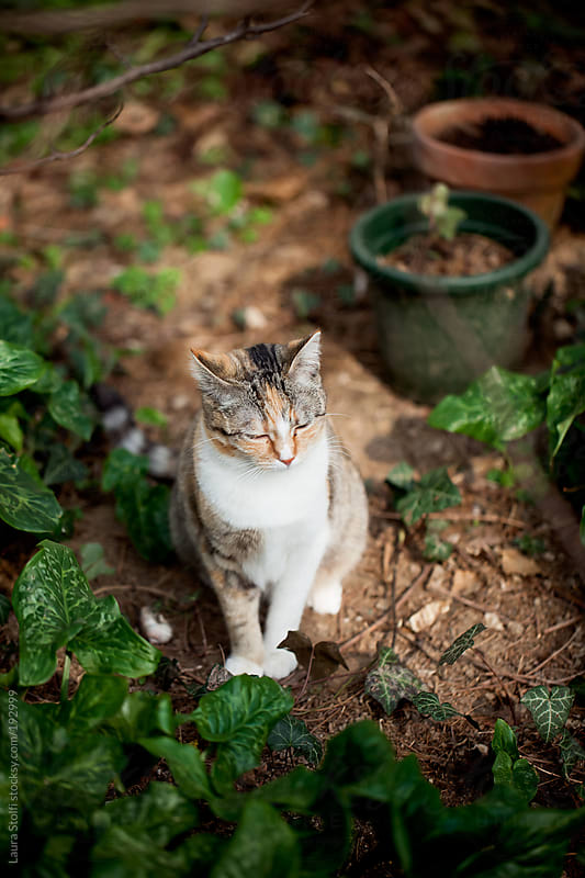 Tabby cat sitting in garden and bathing in the sun with eyes closed  by Laura Stolfi for Stocksy United