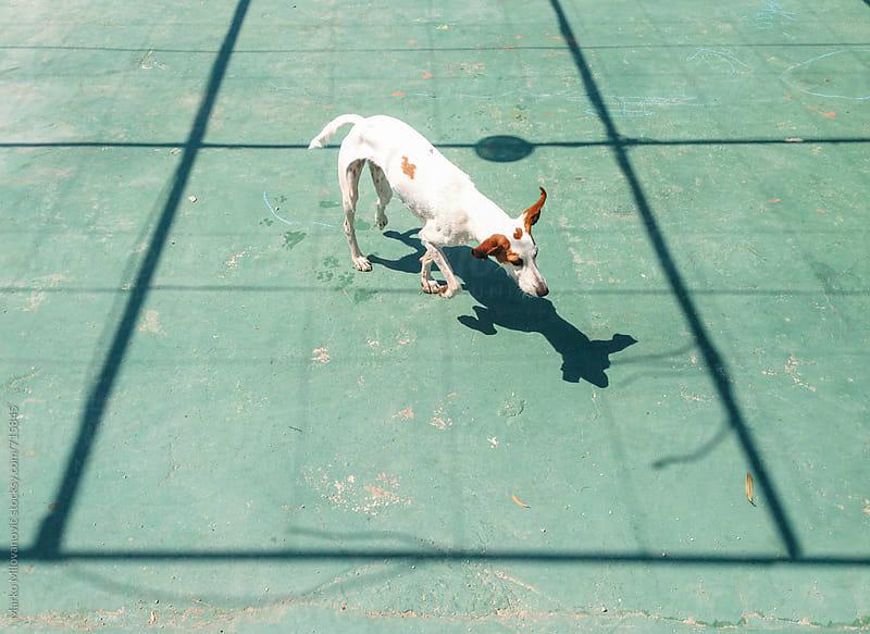 Dog on the street by Marko Milovanović for Stocksy United