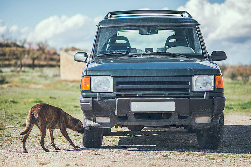 a dog, smelling the wheel of my car. by Javier Pardina for Stocksy United