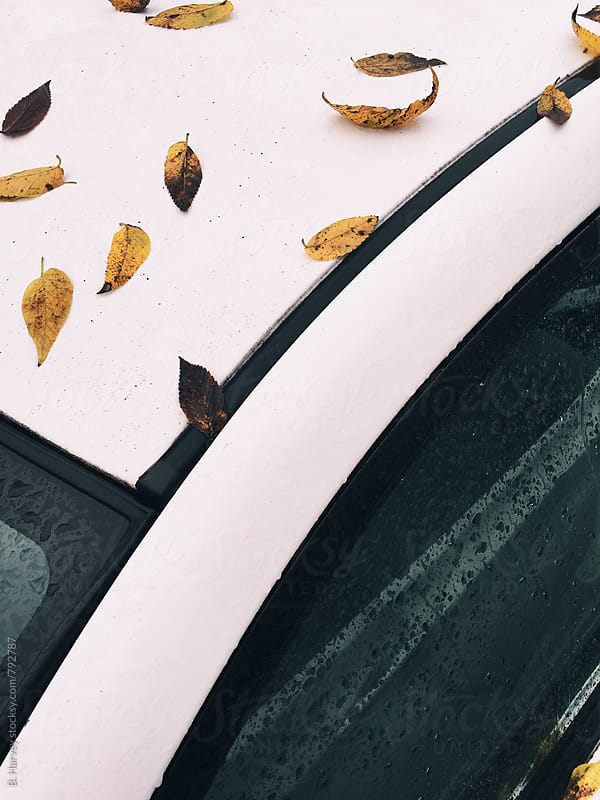 Leaves on a white car by B. Harvey for Stocksy United