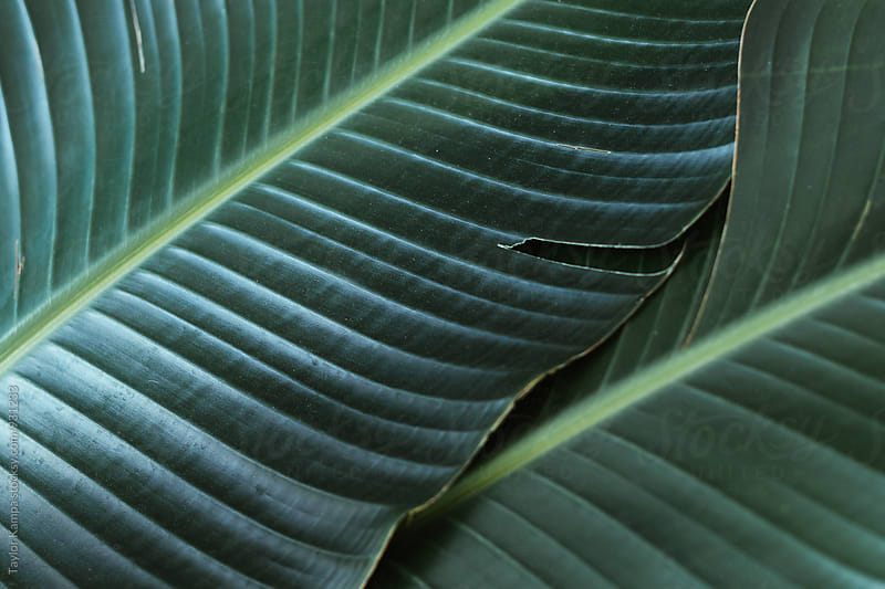Leaf Detail by Taylor Kampa for Stocksy United