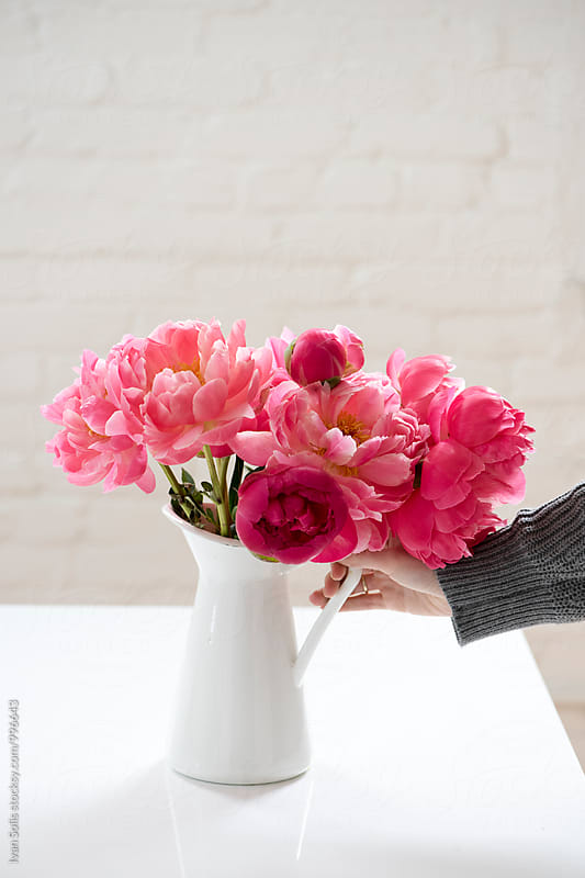 Peonies by Ivan Solis for Stocksy United