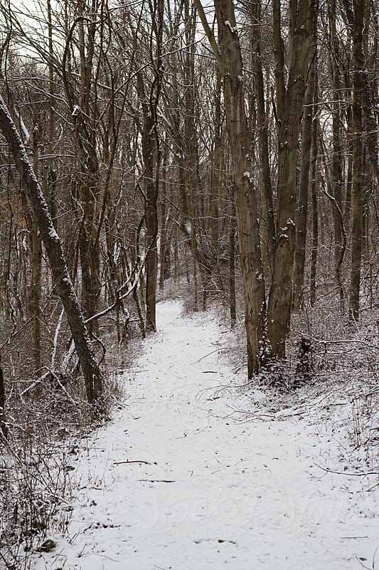 Snow Covered Hiking Trail by Kevin Keller for Stocksy United