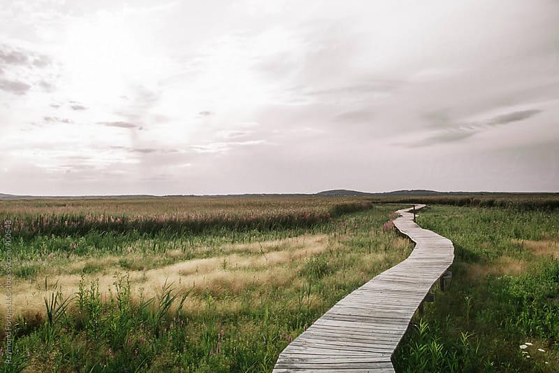 Boardwalk through Marsh by Raymond Forbes LLC for Stocksy United