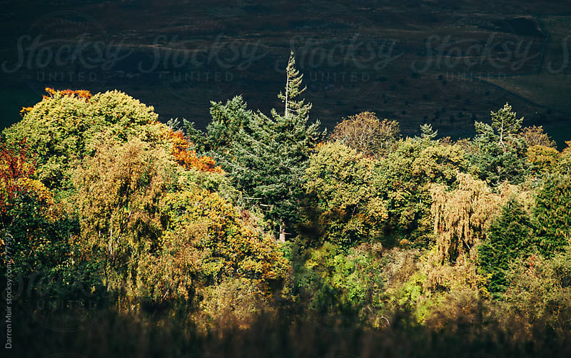 Autumn forest scene: Colorful autumn forest against a dark background. by Darren Muir for Stocksy United