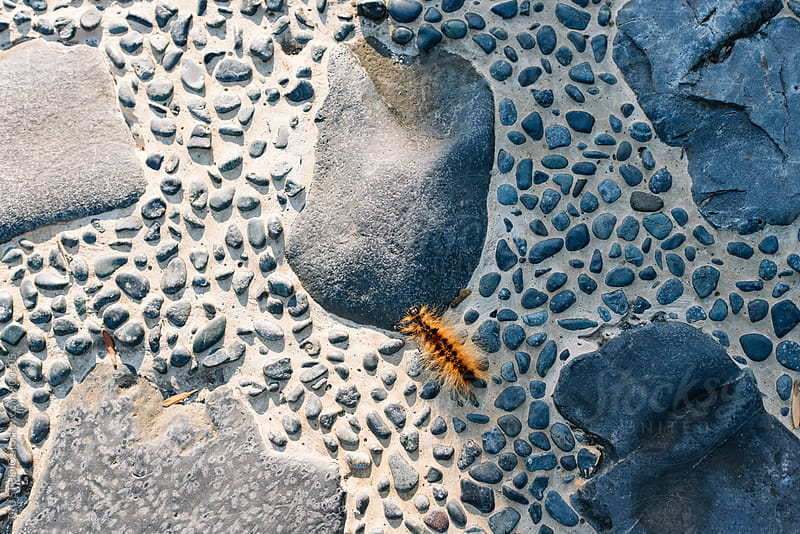 Caterpillar on stone pathway by TRU STUDIO for Stocksy United