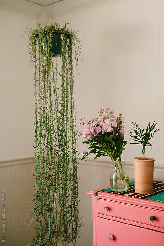 Pink flowers sit on pink dresser by Simone Anne for Stocksy United
