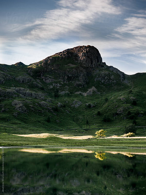 Lonely Tree below Mountain in the British Lake District by Andreas Wonisch for Stocksy United