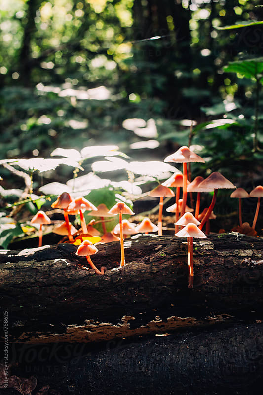 Fungi growing in the woods by Kitty Gallannaugh for Stocksy United