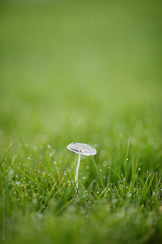 Delicate almost translucent mushroom in the grass by Marcel for Stocksy United