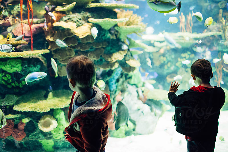 little boys at the aquarium by Sarah Lalone for Stocksy United