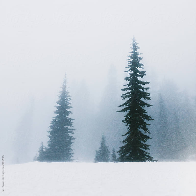 Trees in snow and fog by Ben Sasso for Stocksy United