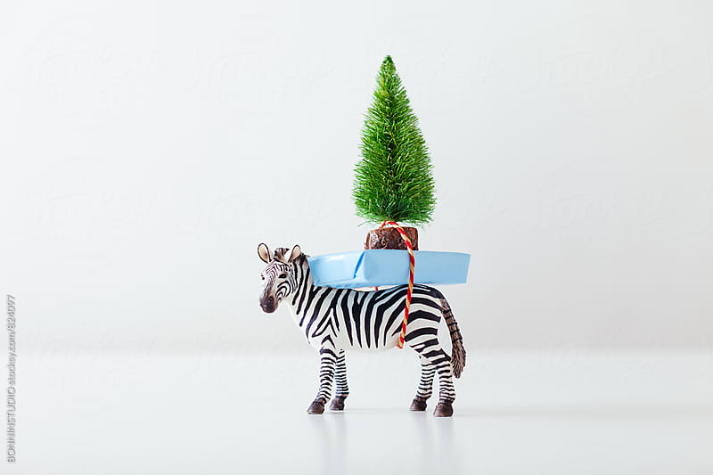Toy zebra carrying Christmas gift and Christmas tree on white. by BONNINSTUDIO for Stocksy United