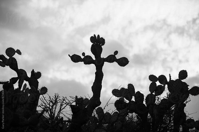A cactus shaped like a cross by Gary Parker for Stocksy United