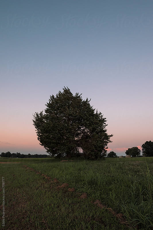 Shot of a solo tree in a field by Eddie Pearson for Stocksy United