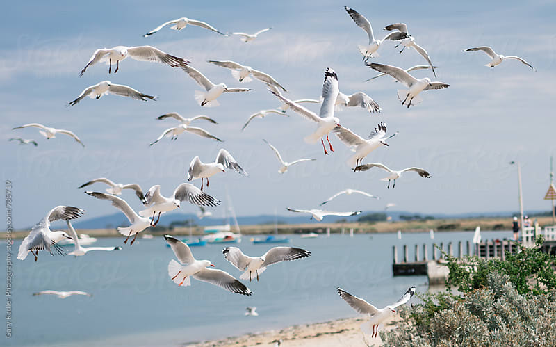 Seagulls Flying by Gary Radler Photography for Stocksy United