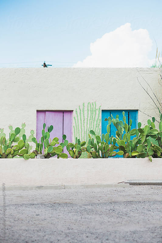 building with colored panels and cactus pad plants by Image Supply Co for Stocksy United