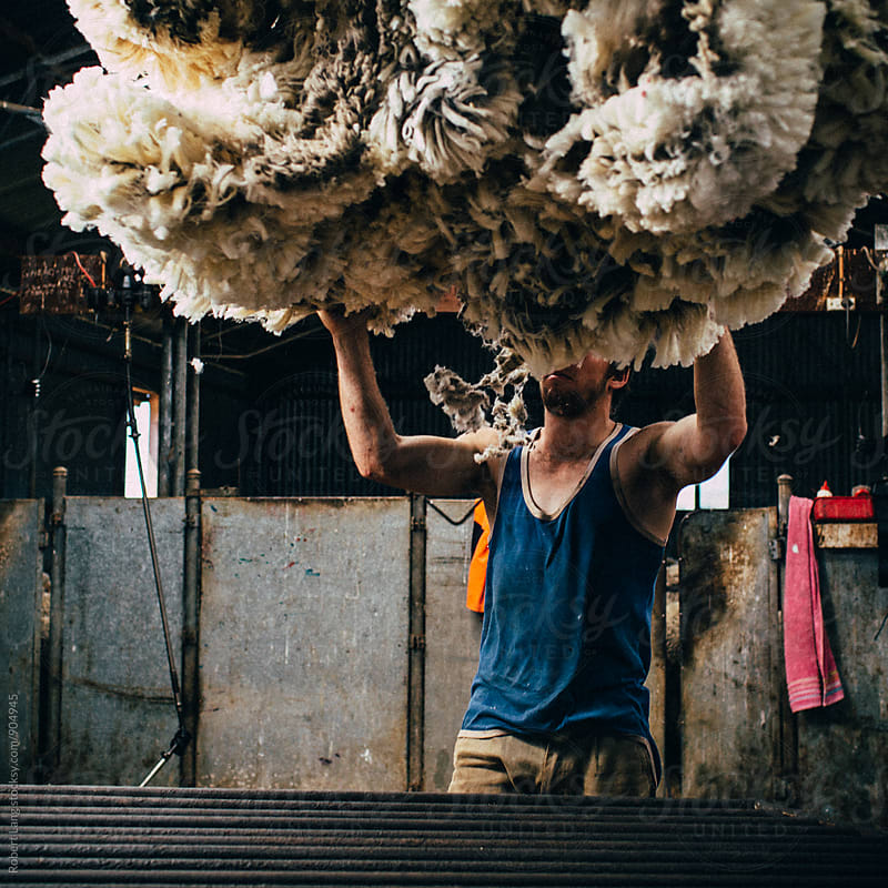 Australian wool by Robert Lang for Stocksy United