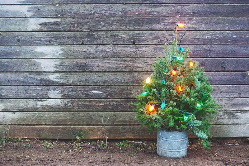 Miniature lighted Christmas tree along a rustic wood wall by Tana Teel for Stocksy United