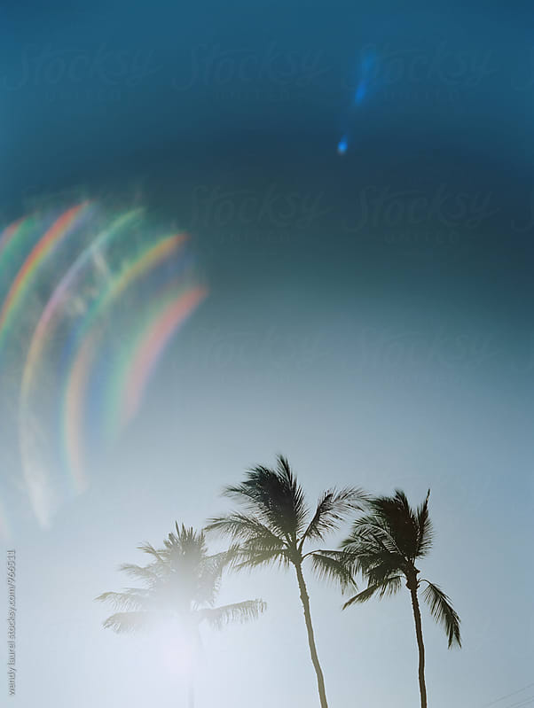 rainbow flare palm trees with negative space by wendy laurel for Stocksy United