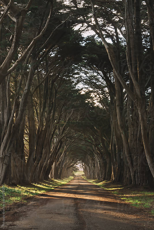 Cypress tree tunnel at sunrise with sunbeam by Preappy for Stocksy United