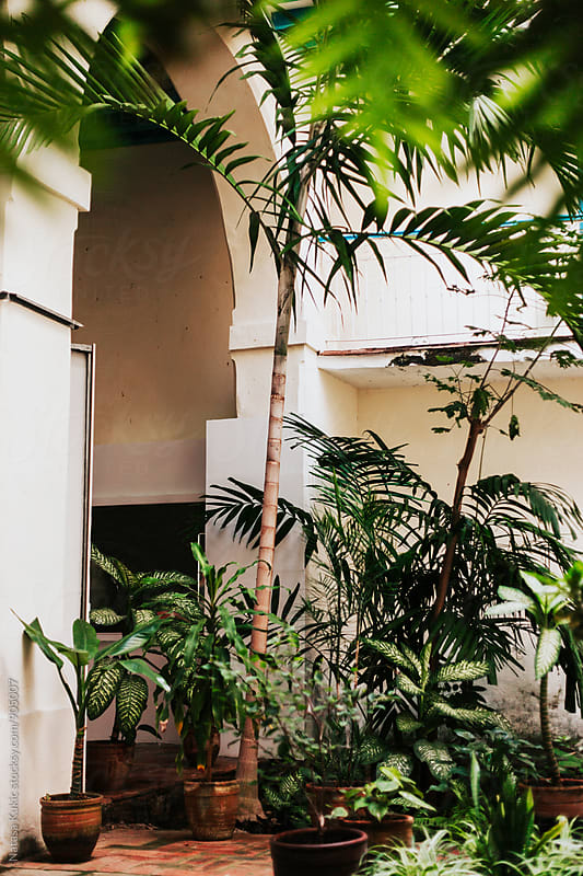 Plants in a hallway of a building by Natasa Kukic for Stocksy United