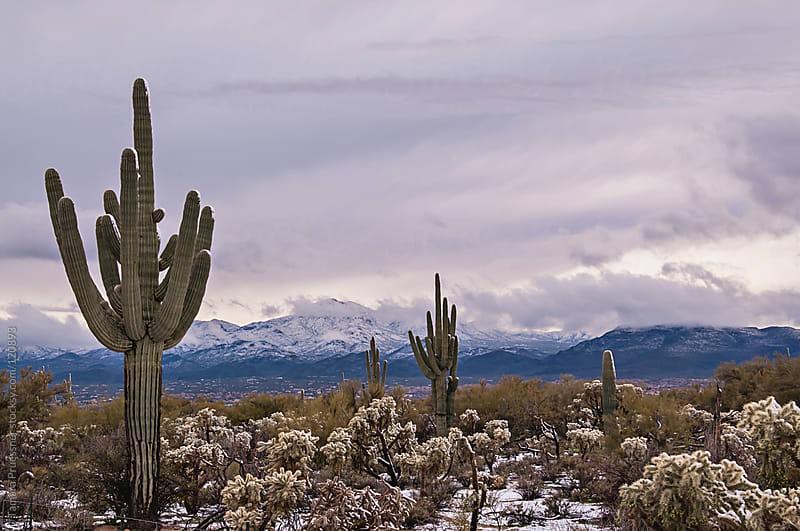 Snowfall On Desert Scene by Tamara Pruessner for Stocksy United