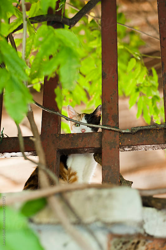Cat peering at the camera while sitting behind gate on wall in garden by Laura Stolfi for Stocksy United