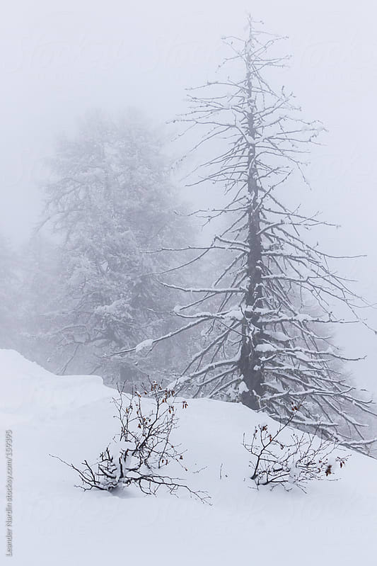 snowcovered trees in winterlandscape by Leander Nardin for Stocksy United