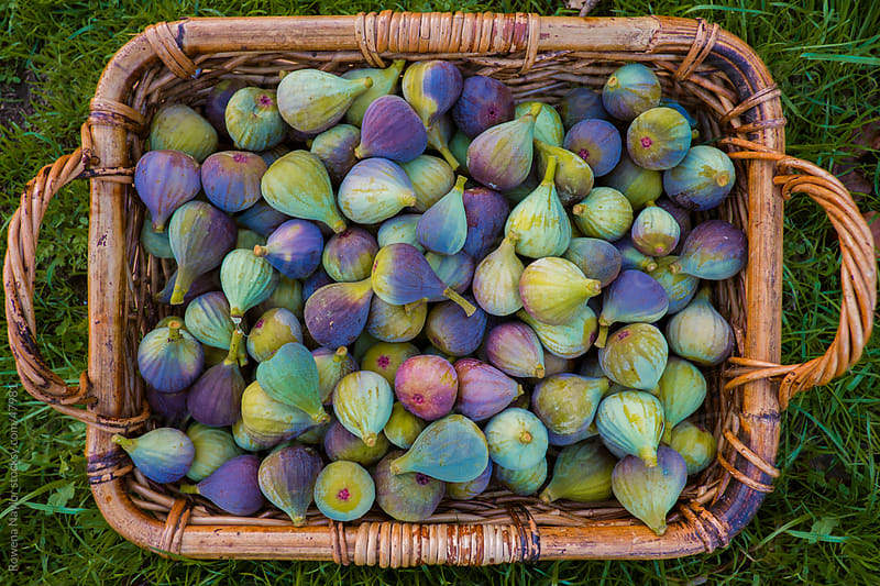 Basket of Fresh Figs by Rowena Naylor for Stocksy United
