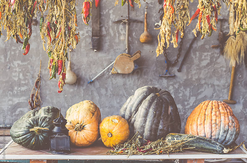 Drying up pumpkins on a table. by Eva Plevier for Stocksy United
