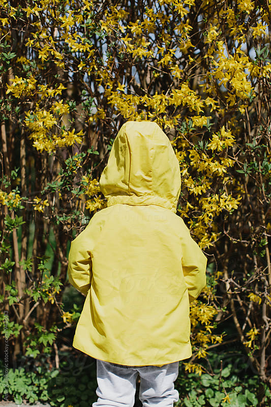 Small child wearing a bright yellow jacket by Amir Kaljikovic for Stocksy United