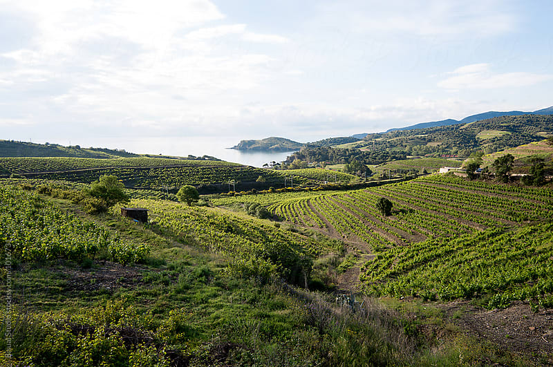 Landscape of vineyard in France by Bisual Studio for Stocksy United
