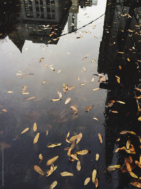 Reflection of the city in a puddle of rain in New York City by Greg Schmigel for Stocksy United