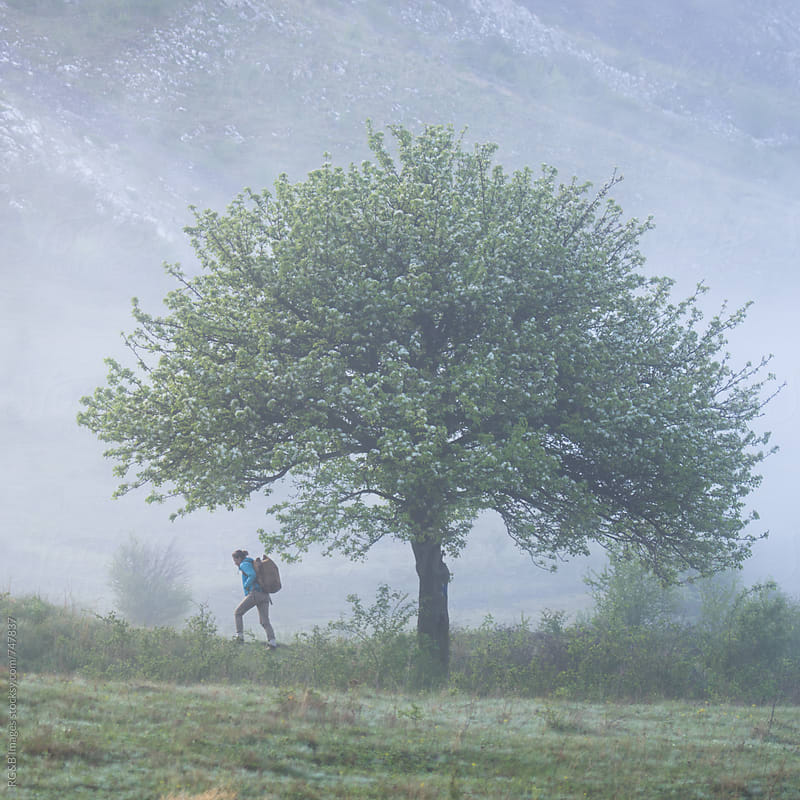 Woman hiking and passing by a young tree in bloom by RG&B Images for Stocksy United