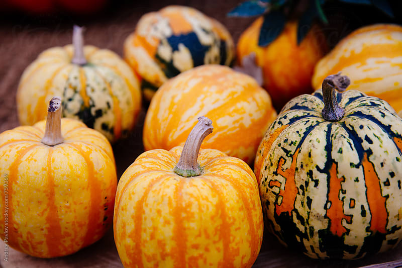 Colorful small pumpkins by Andrey Pavlov for Stocksy United