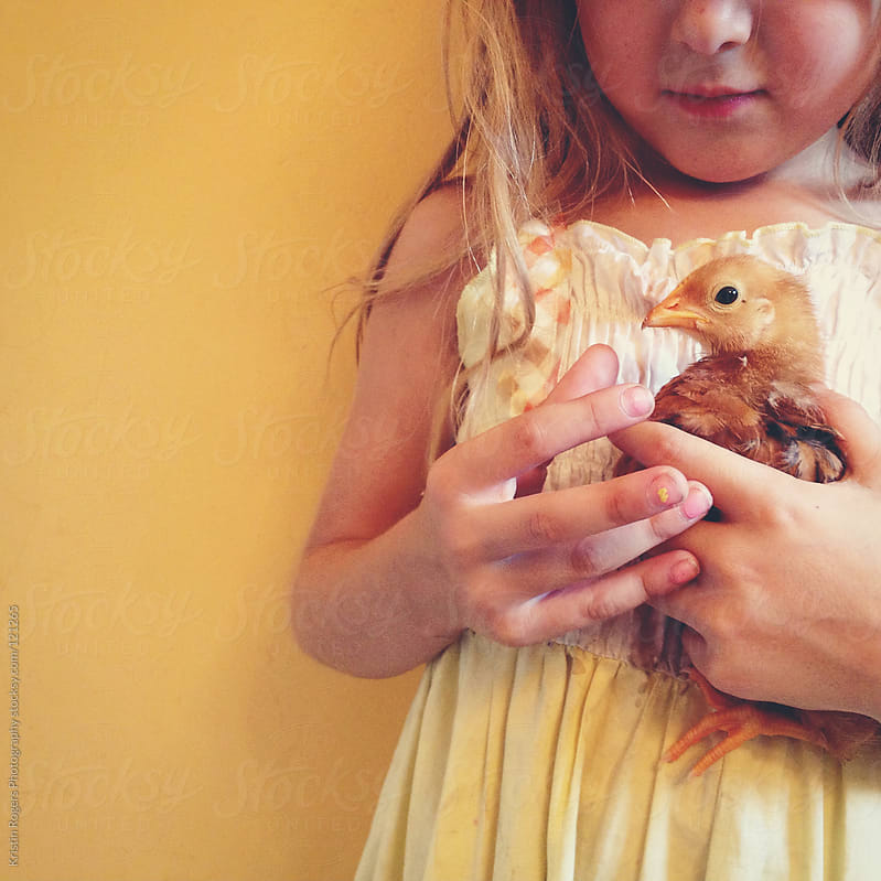 young child holding baby chick in hands by Kristin Rogers Photography for Stocksy United