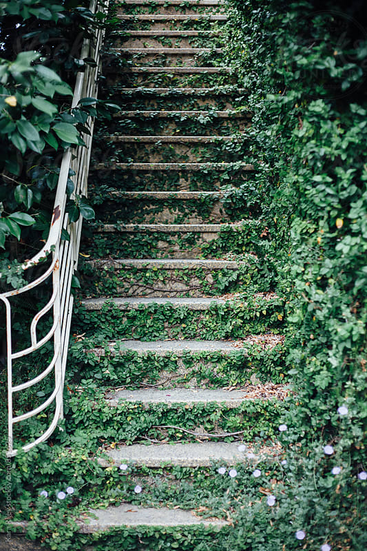 Ivy Covored Staircase by Kara Riley for Stocksy United